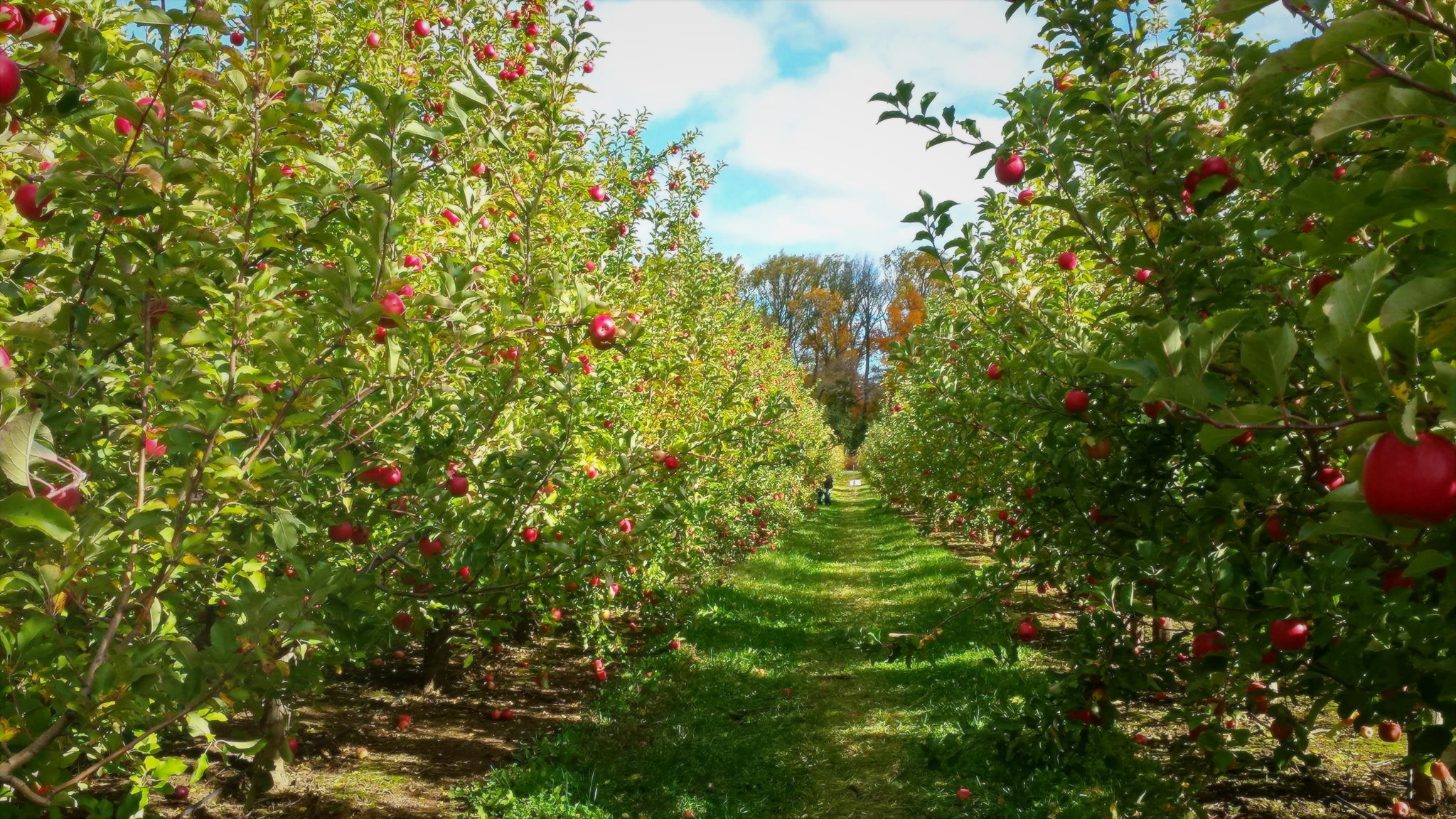 About Solebury Orchards | Solebury Orchards
