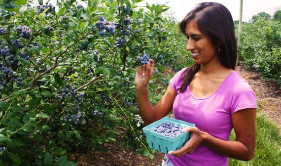 Picking in the Blueberries