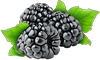 PYO Blackberries